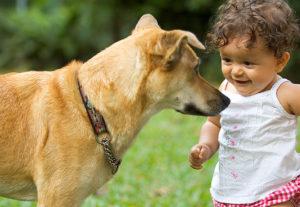 miedo a los perros