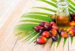 El aceite de palma, su uso, sus beneficios y sus inconvenientes